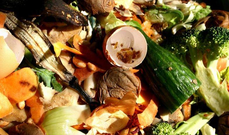 immagine-rifiuti-organici